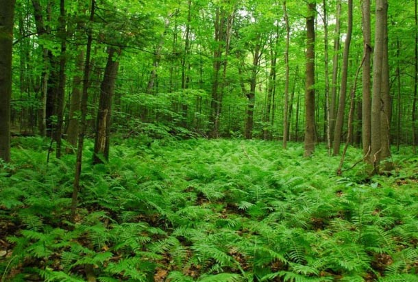 the fight to save ottawa s beaver pond forest from developers